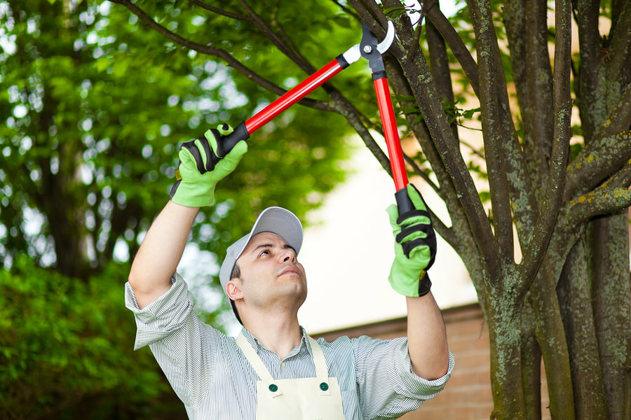 Tree pruning by a professional
